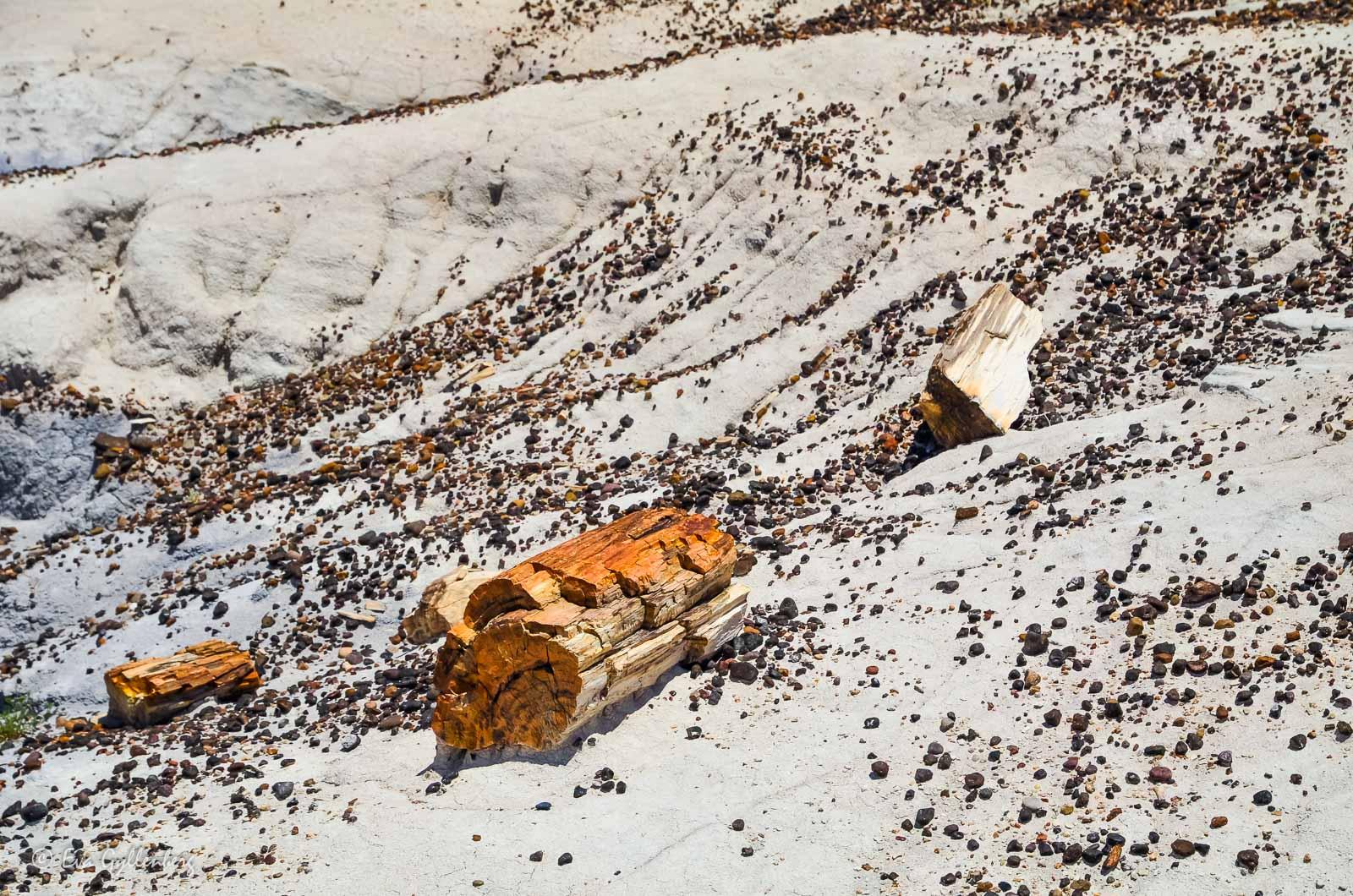 Förstelnat trä i Petrified Forest