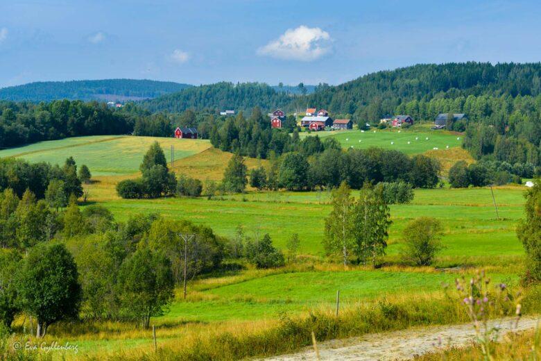 Sevärdheter vid Höga kusten - Mina 7 favoriter kring Örnsköldsvik 6