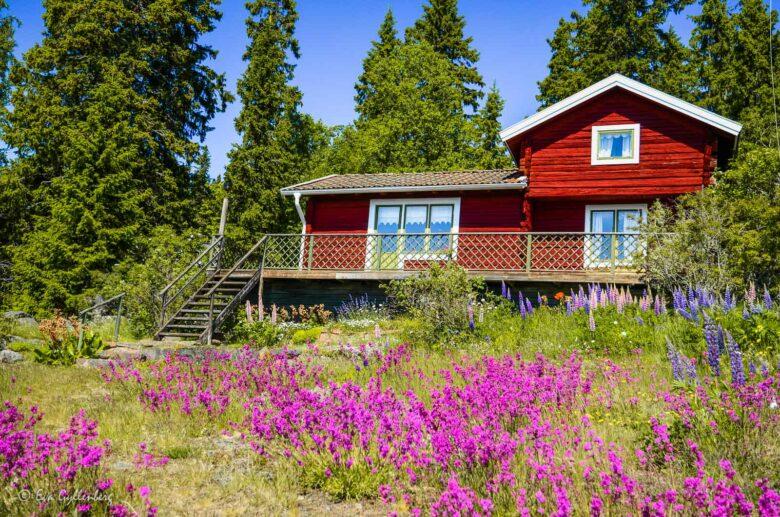 Rött hus på Ulvön - Höga kusten