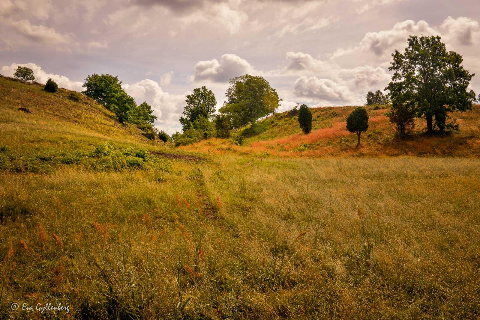 Lite Toscana-känsla i Skåne