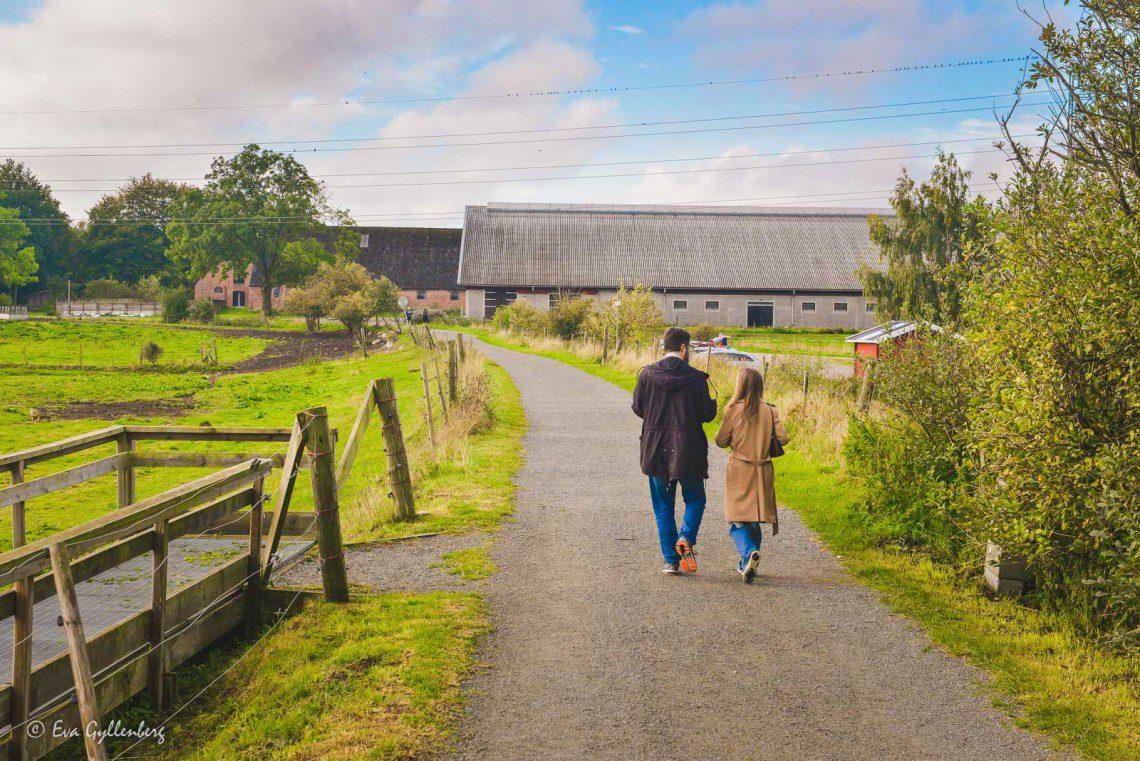 Familjevänlig vandring utefter Linnérundan