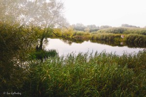 Vattenriket i morgonsol