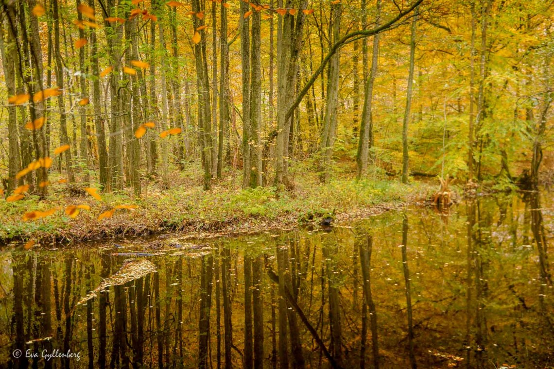 Söderåsens nationalpark i höstskrud