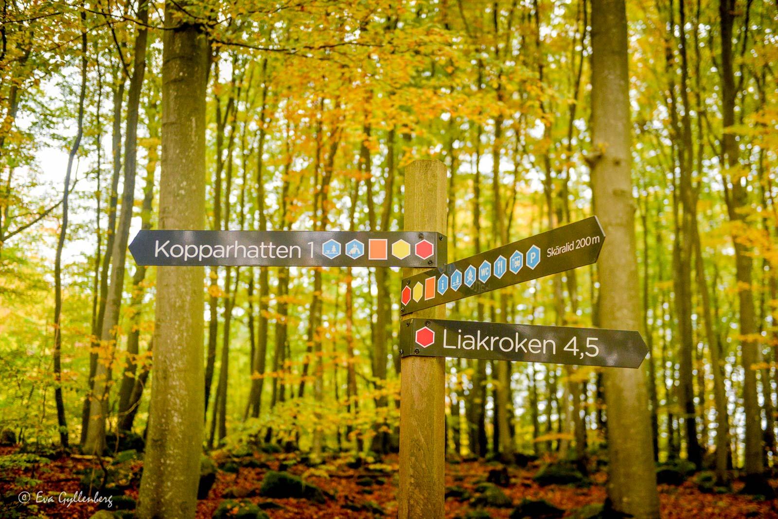 Skyltar i Söderåsens nationalpark