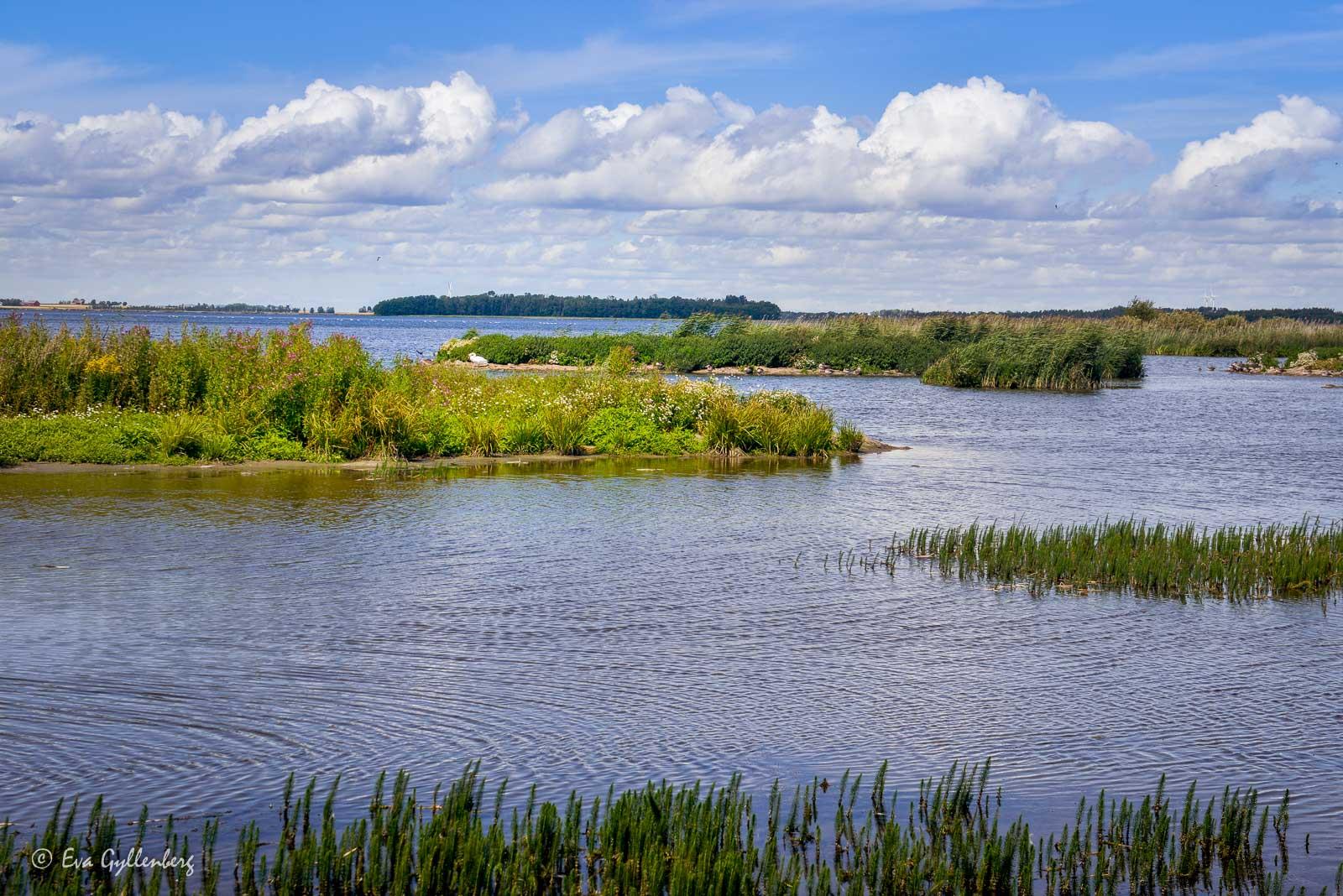 Tåkern fågelsjö och naturreservat