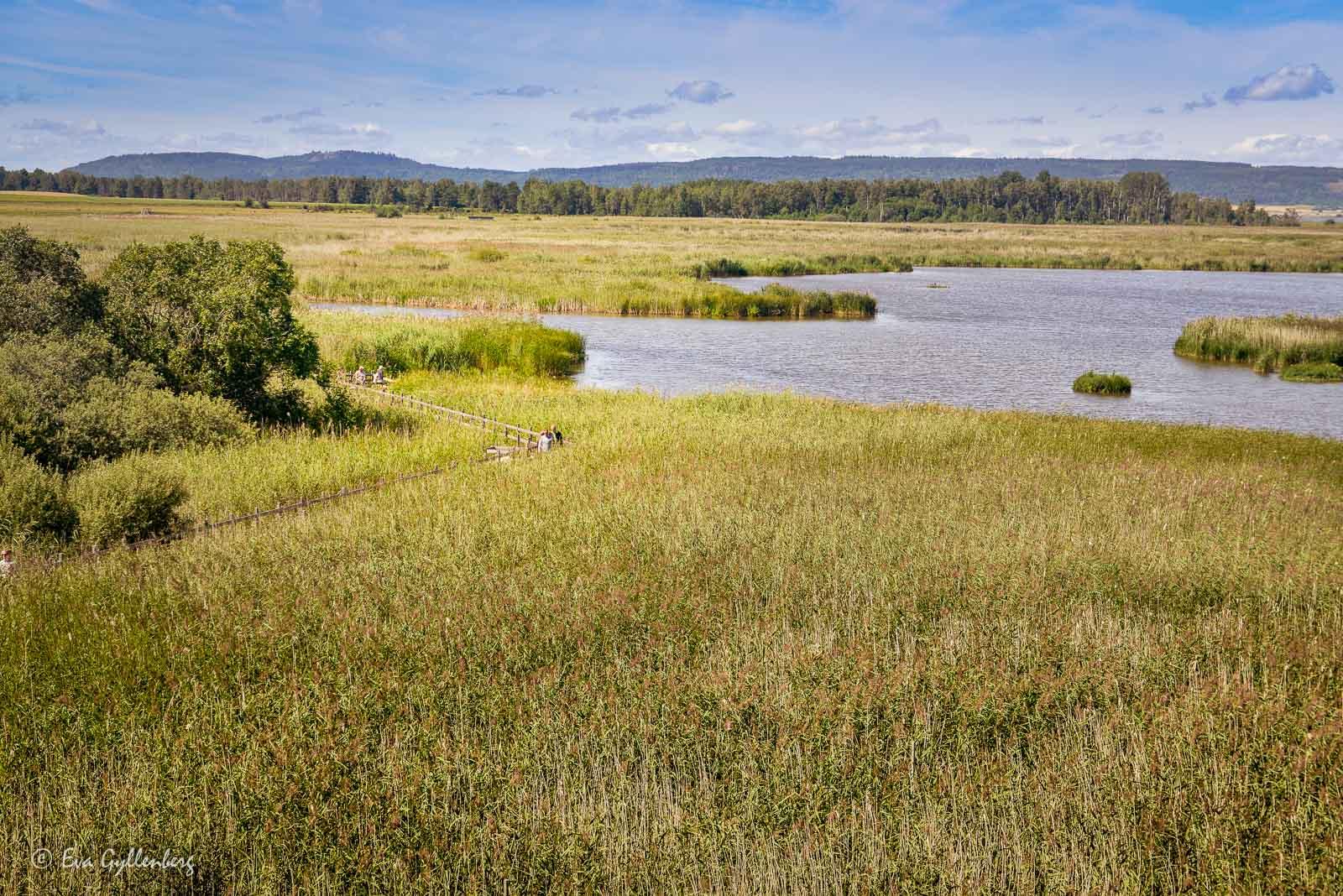 Tåkern naturreservat
