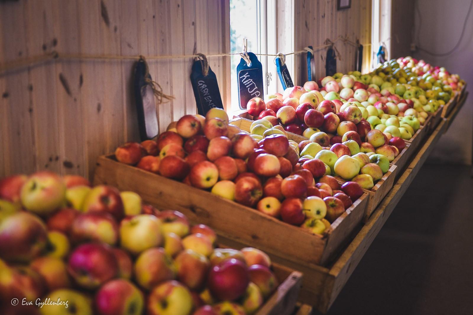 Äppelaffär med många sorters äpplen vid Ivösjön