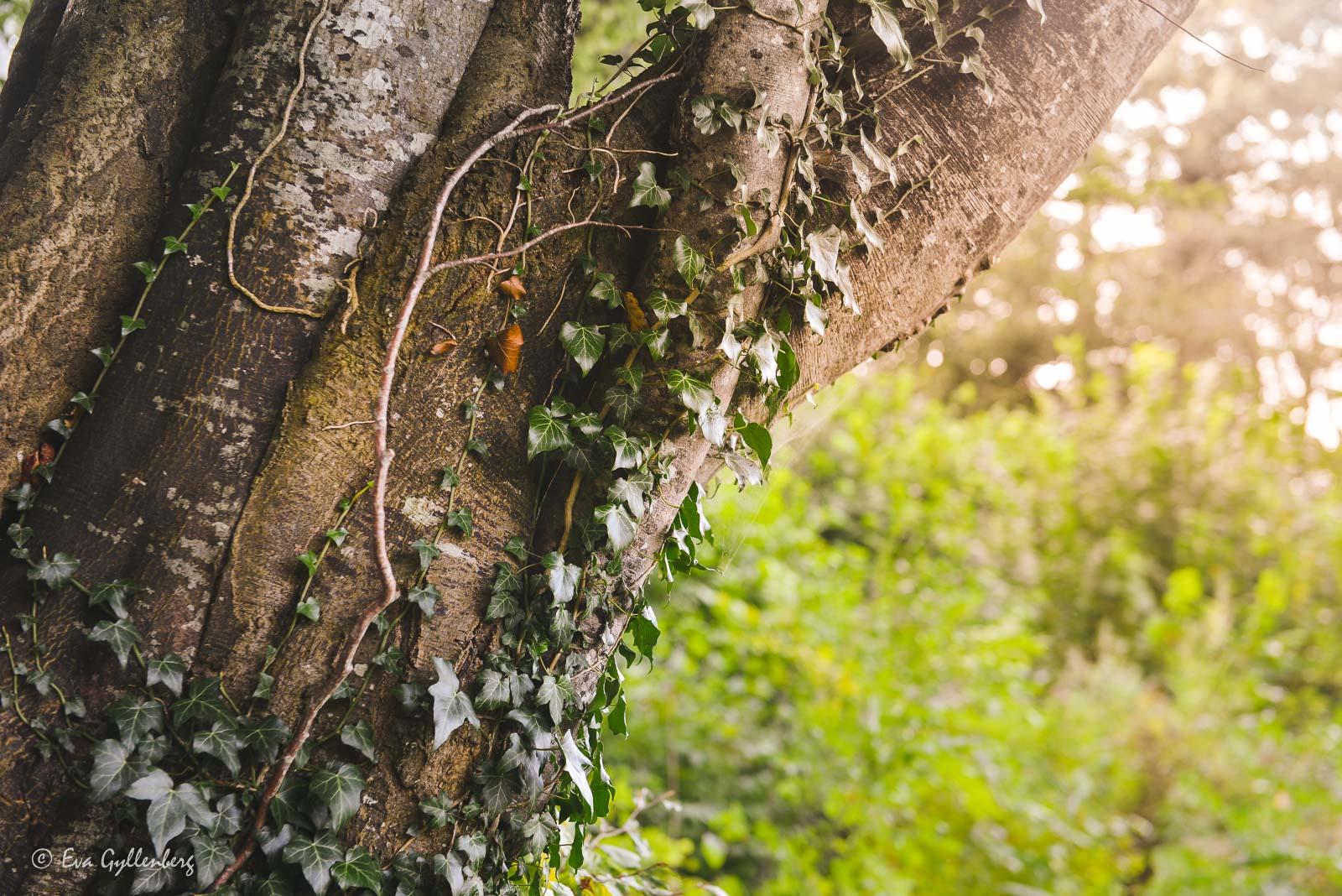Grönska vid Ivösjön