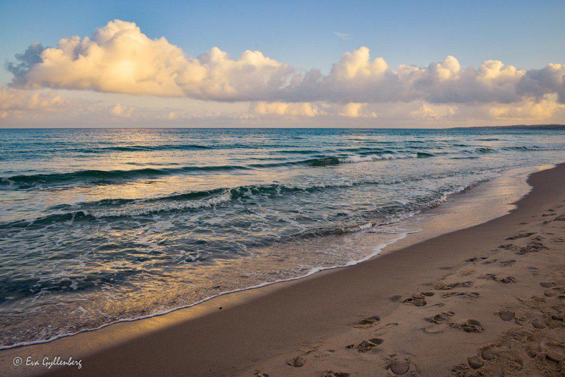 Höst på stranden i Stenshuvud