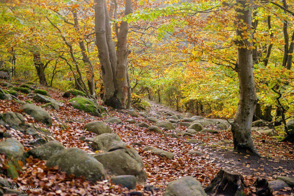 Skog på Österlen