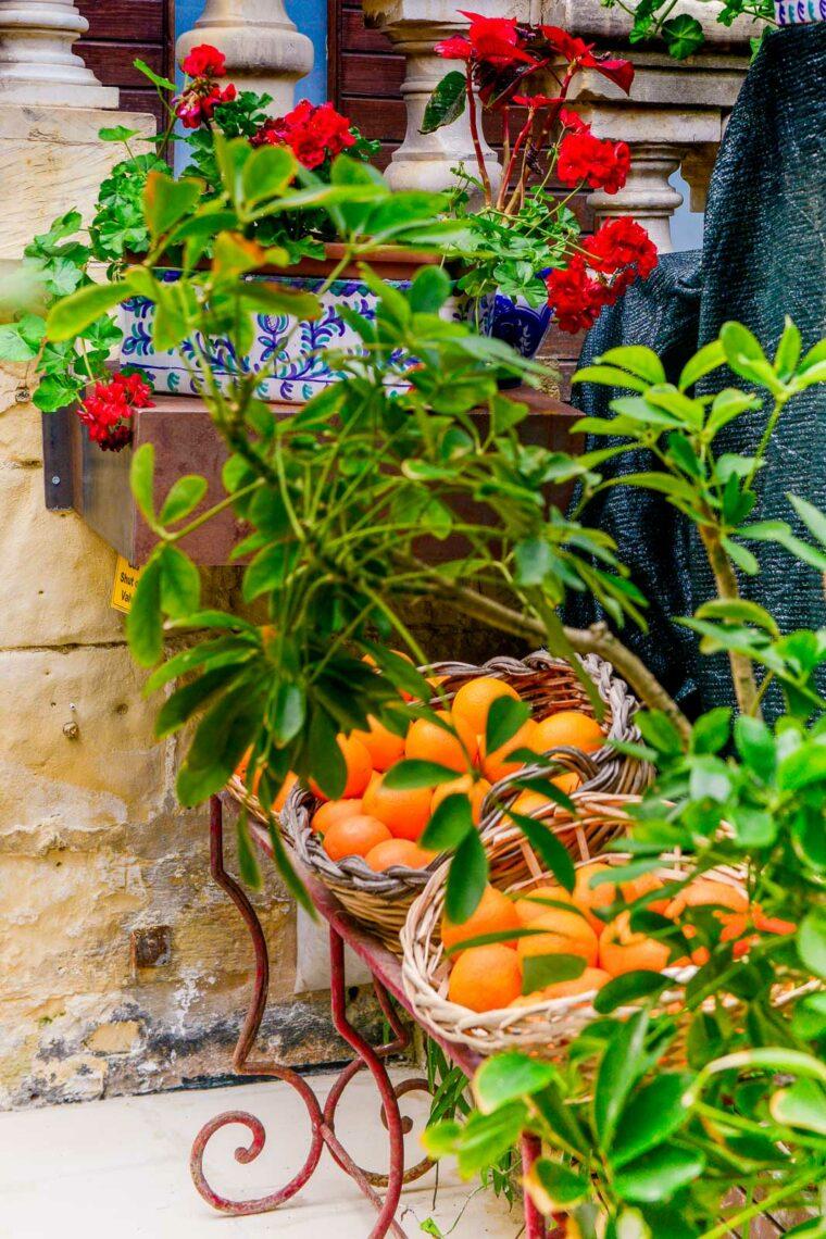 Apelsiner i korgar på café