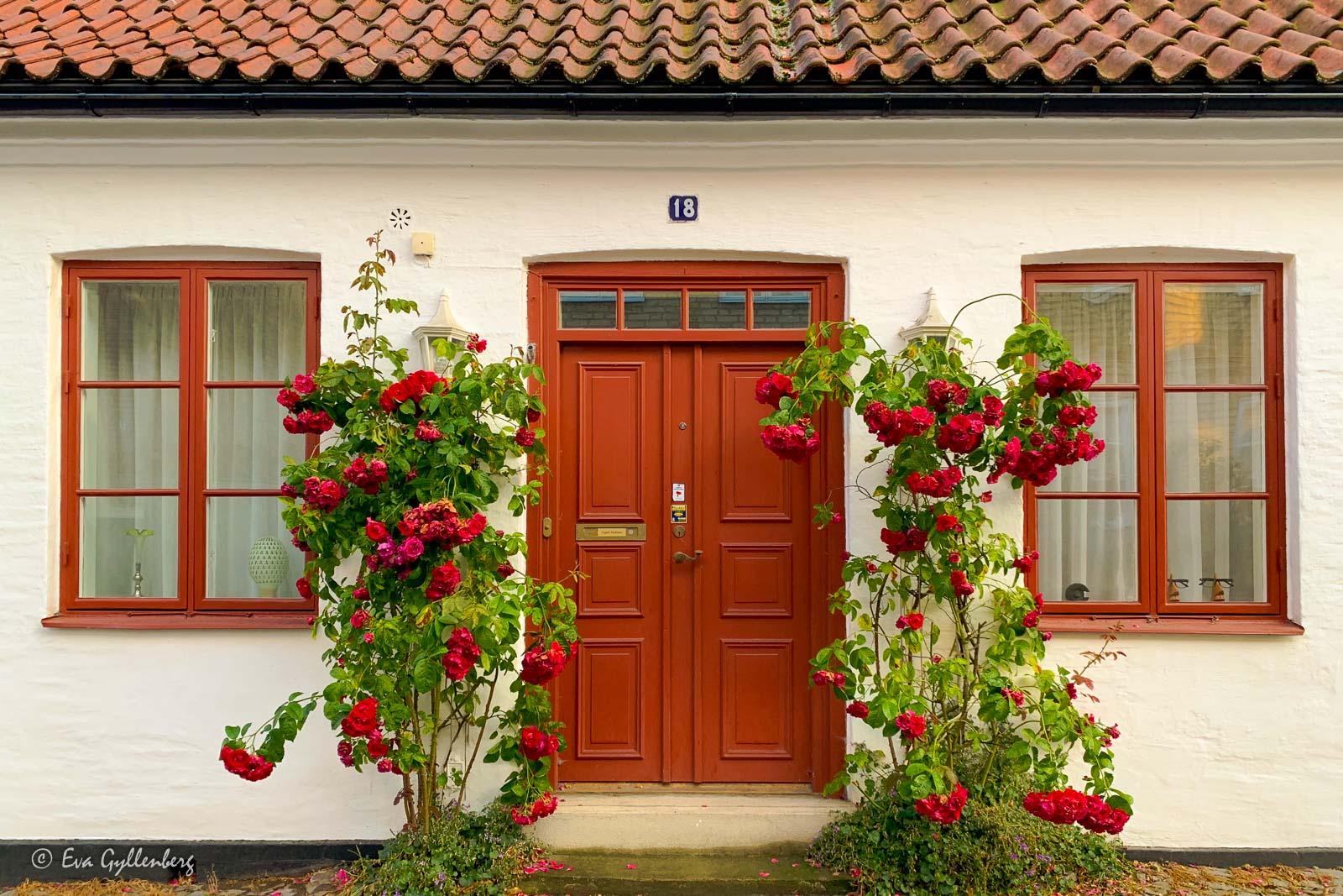 Vackert vitt hus med röda stockrosor i Lund