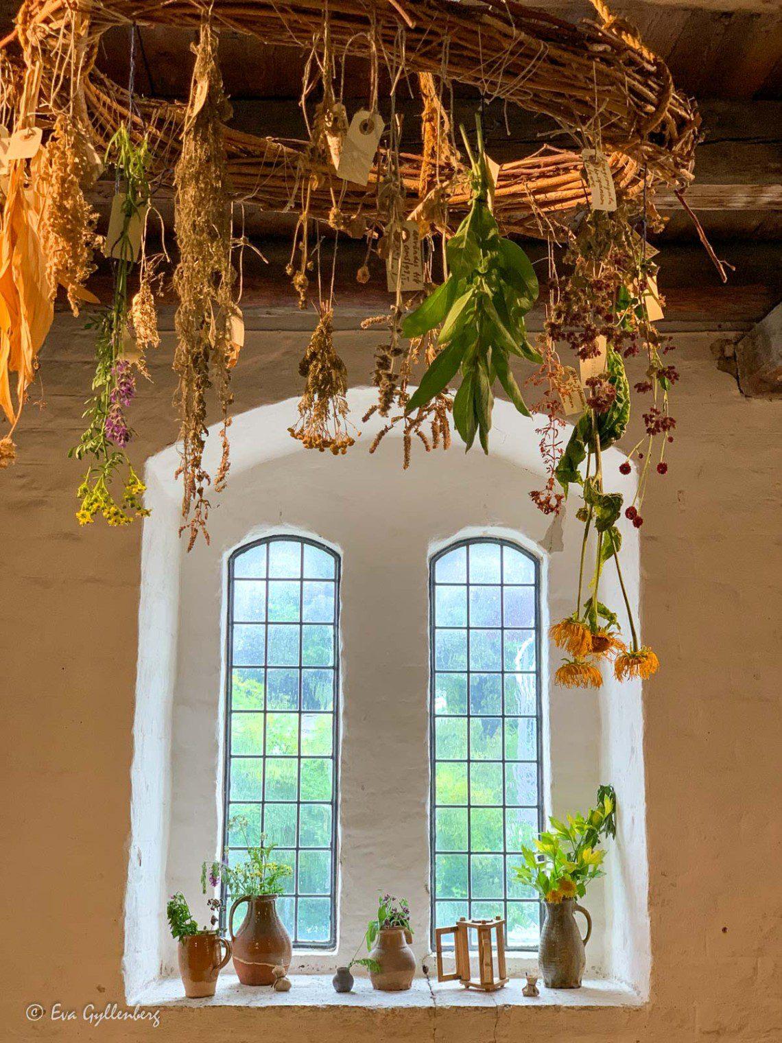 Torkade växter hänger från taket i Kulturen i Lund - Skåne