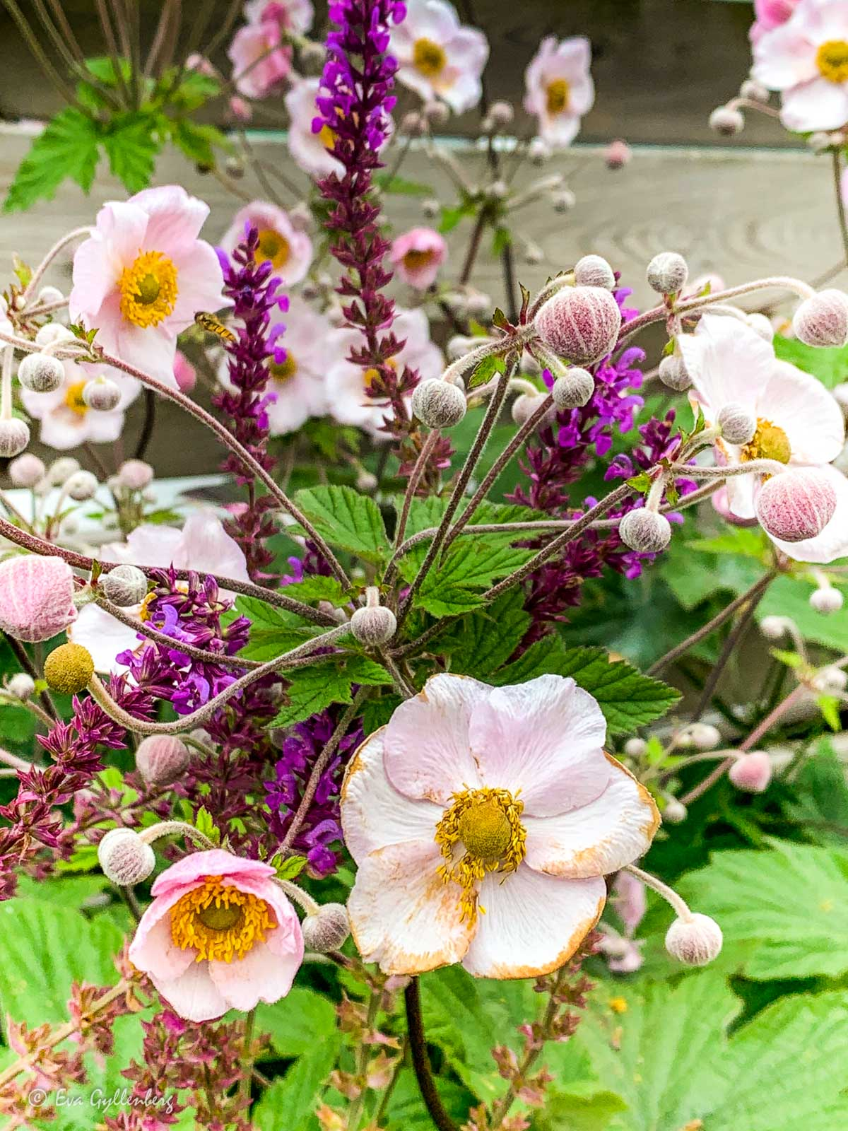 Blommor i Lund