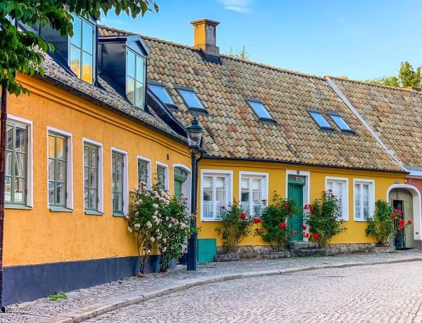 Stockrosor bland skånegårdar i Lund