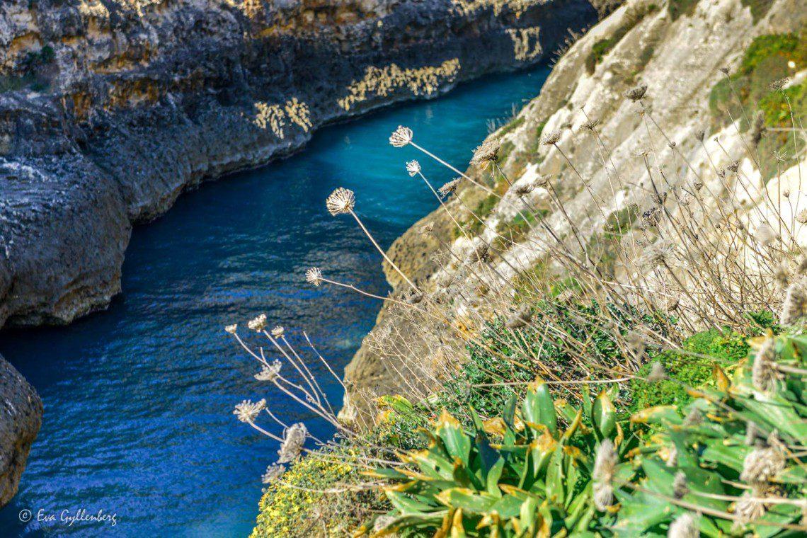 Turkost vatten och blommor vid klipporna vid Wied il-Ghasri