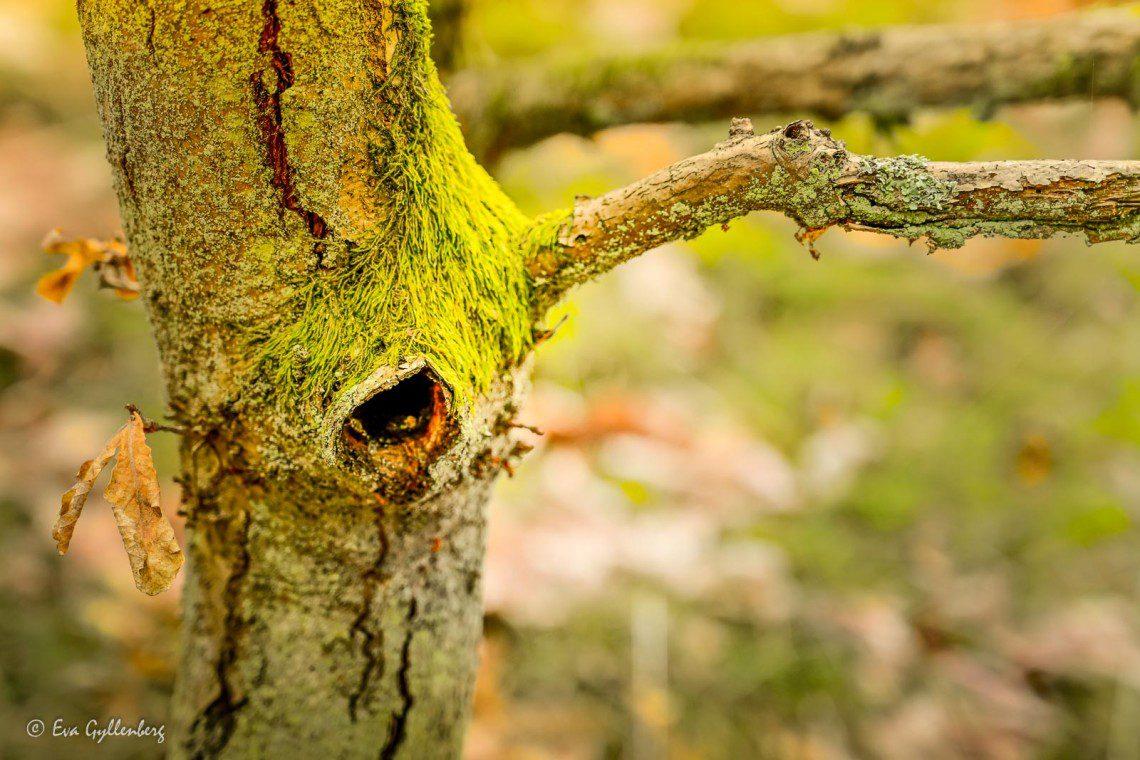 Grön trädstam