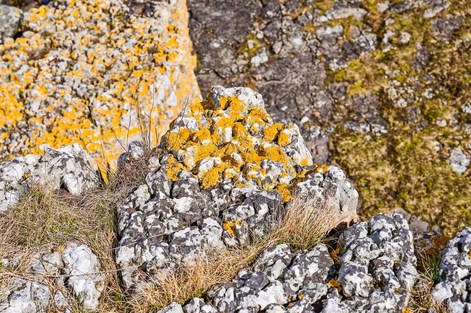 Mossbeklädda klippor