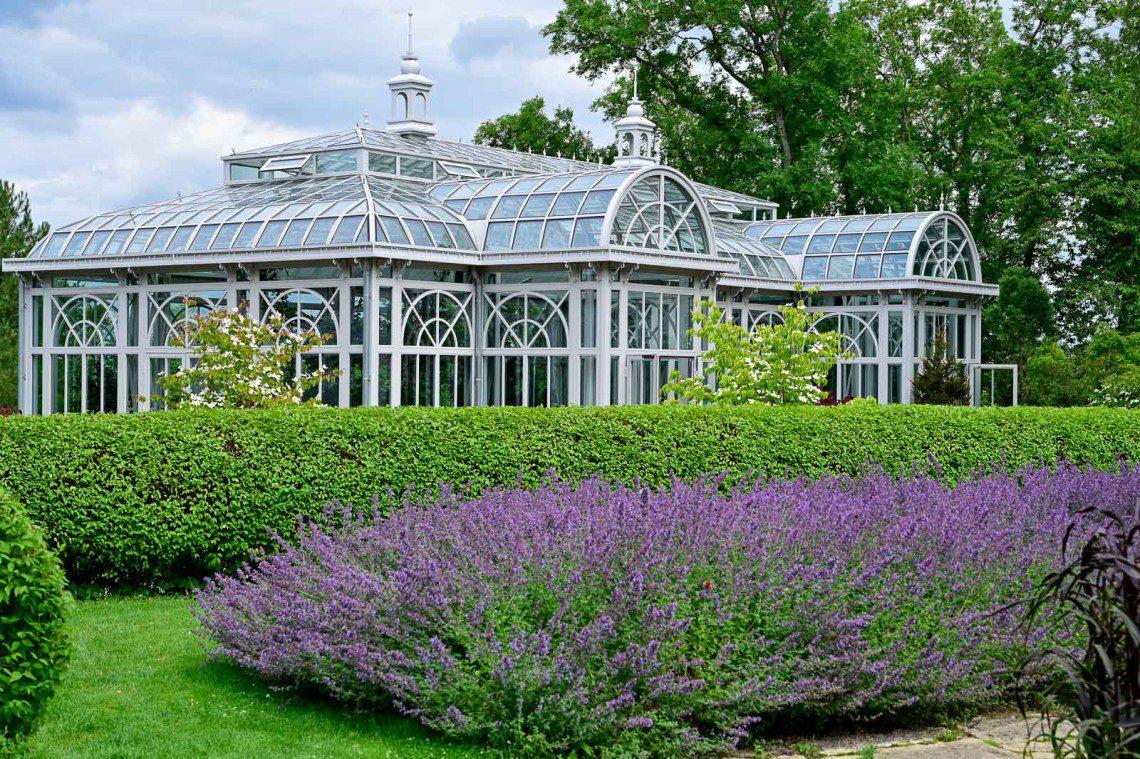 Växthus med lavendel