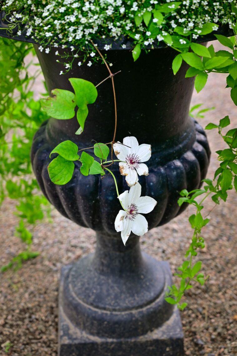 Gjutjärnskruka med blomma