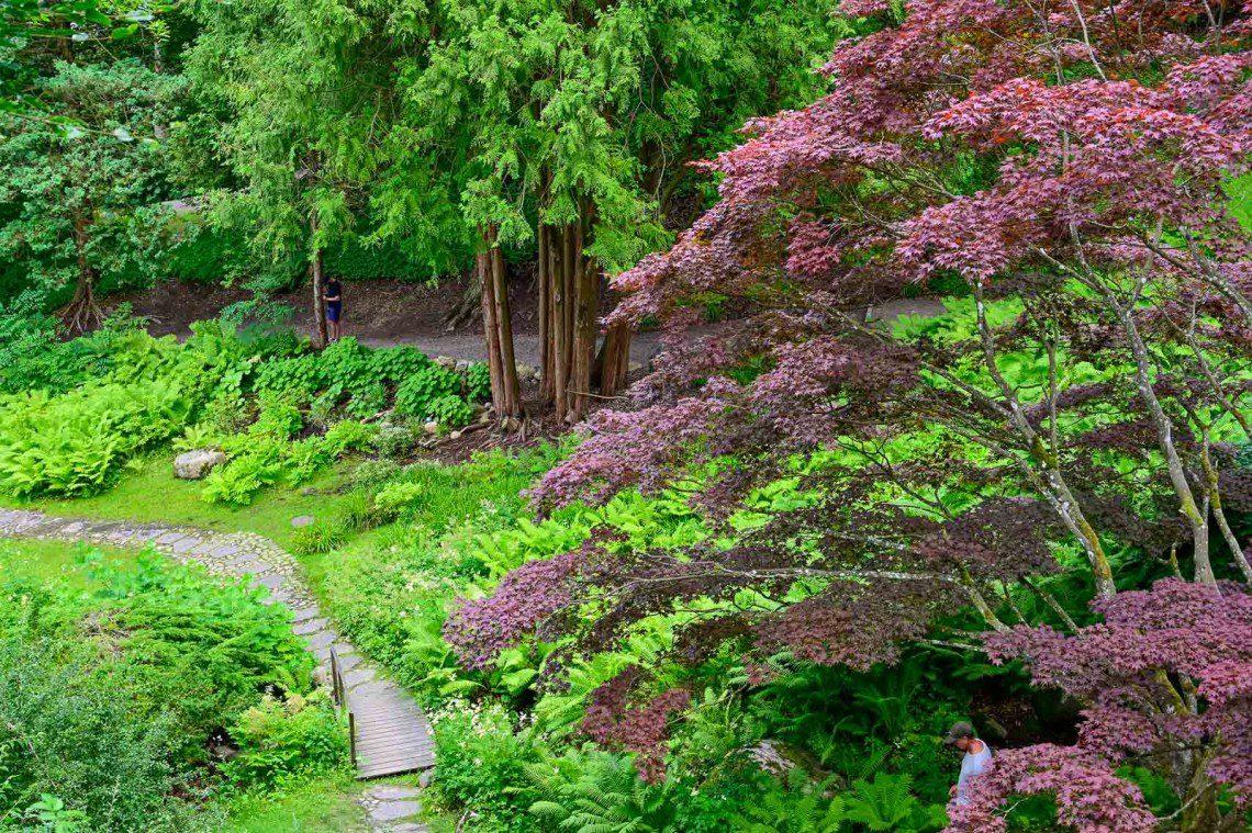 Träd med röda blad i den japanska trädgården
