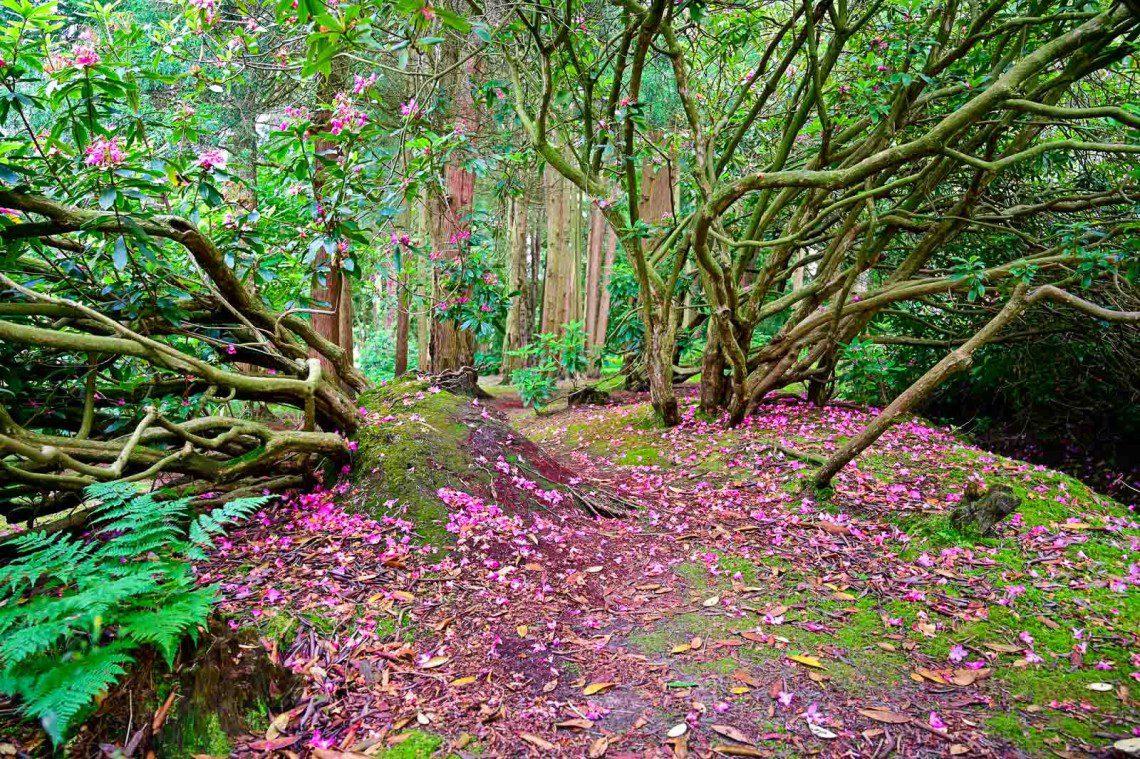 Rosa blad täcker marken under ett träd