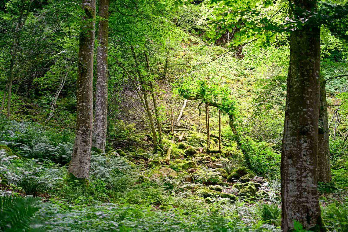 Mossbeklädd gunga i skogen
