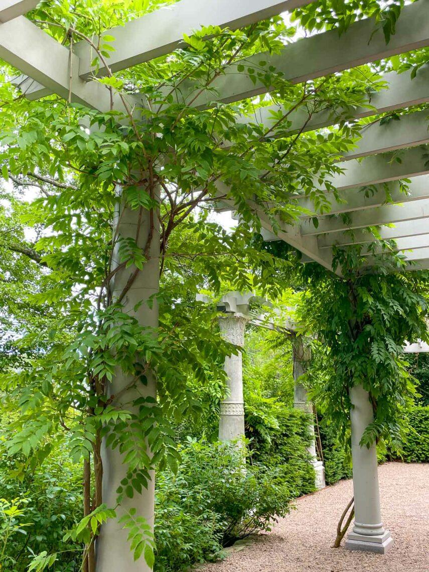 Perogolas med grönska i den orientaliska trädgården