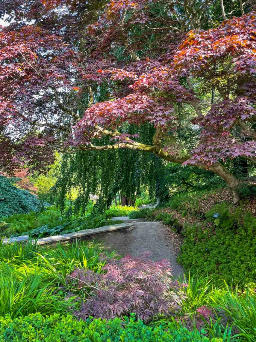 Trappan ner till den japanska trädgården