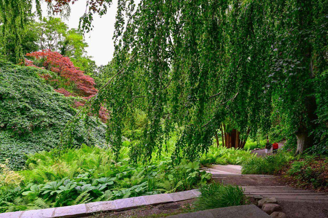 Trappan till japanska trädgården