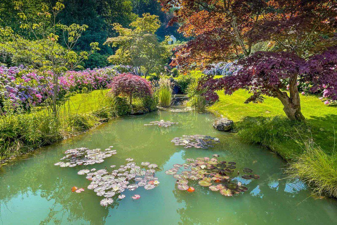 Magiskt vacker damm omgiven av hortensior