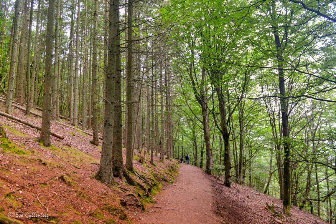 Kullaleden genom bokskog och sluttande terräng
