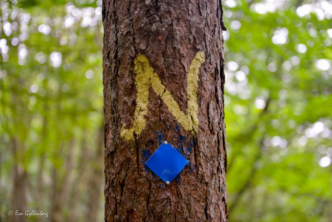 Ett gult N som visar vägen till Nimis