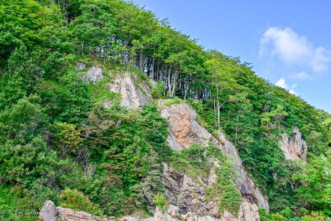 Exotiska träd växer utefter klipporna vid Josefinelust