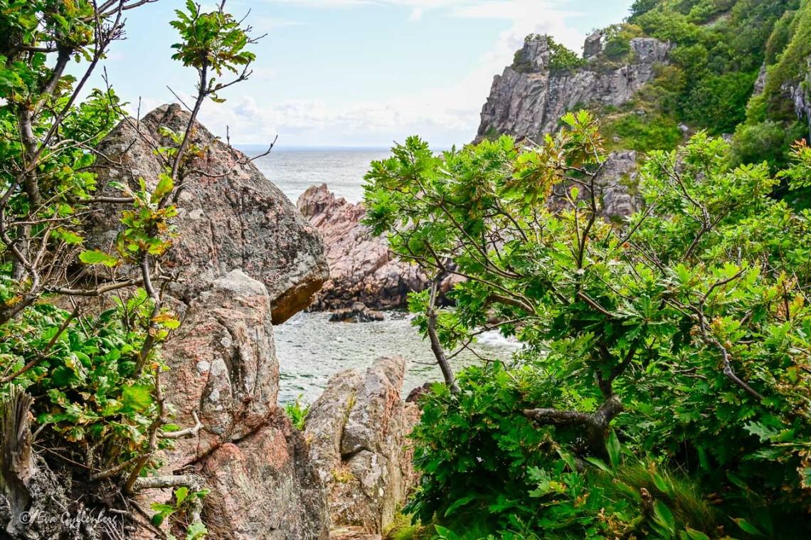 Nästan tropiska växter vid havet i Kullaberg