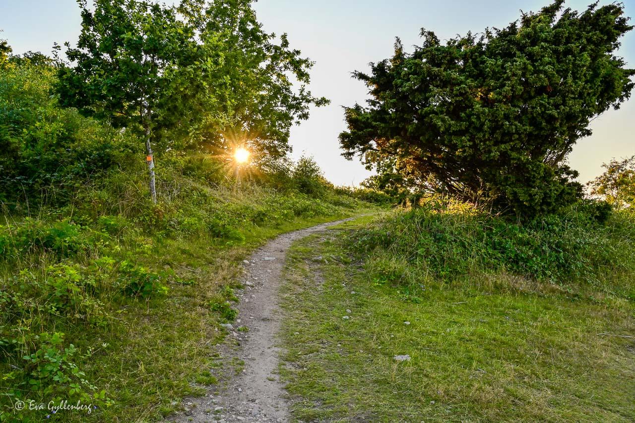 Låg sol vid stig vid Nabbens naturreservat