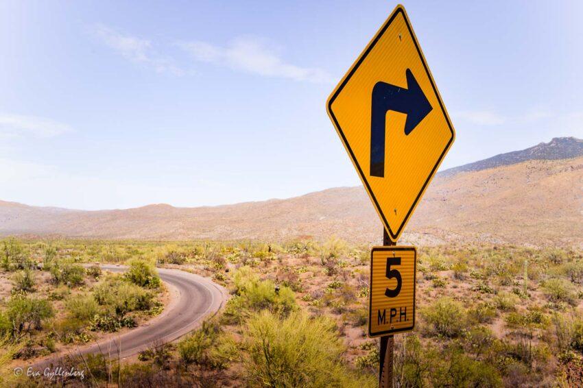 Vägen i Saguaro national park